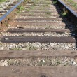 macro railroad track — Stock Photo