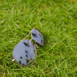 Stock Photo: Sunglasses on grass