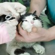 Wounded cat — Stock Photo