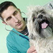 Dog to the vet - Stock Photo