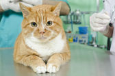 Garfield to the vet — Stock Photo