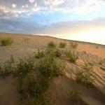 Sand dune at Great Sand Hills in scenic Saskatchewan — Stock Photo