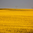 Storm clouds over a Saskatchewan canola crop - Stock Photo