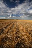 Lovely clouds above a Saskatchewan stubble field — Stock Photo