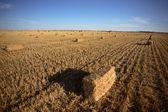 Bele słomy w polu saskatchewan — Zdjęcie stockowe