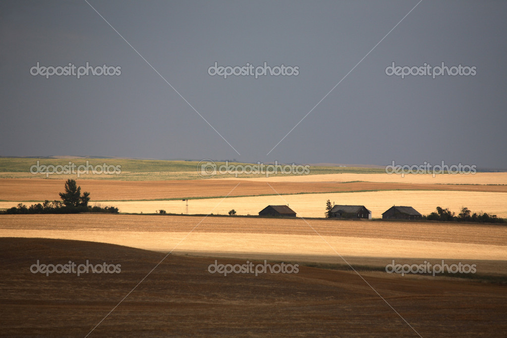 A Prairie summer scene — Stock Photo #5550385