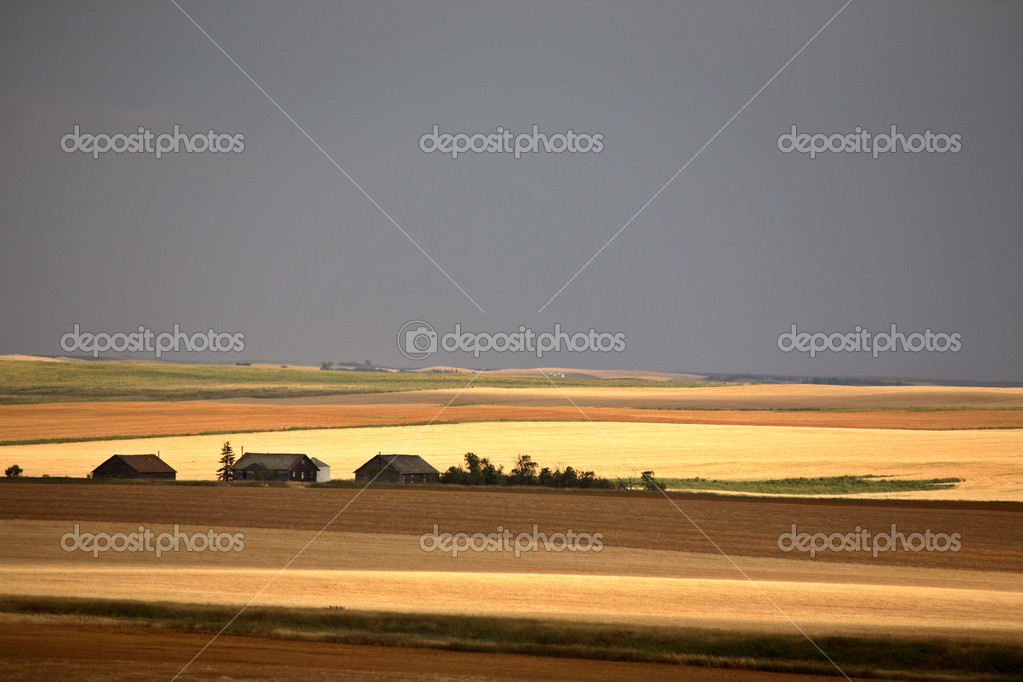 A Prairie summer scene — Stock Photo #5550386