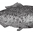 Shad, river herring or Alosa menhaden vintage engraving. — Vector de stock