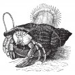 Vector de stock : Hermit crab dragging Seanemones, vintage engraving.