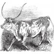 Royalty-Free Stock Vector Image: Brazilian, cow, vintage engraving.
