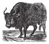 The American bison or American buffalo. Vintage engraving. — Stock Vector