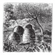Lodges and dams built by beavers vintage engraving — Stock Vector #6721280