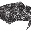 Naucrates Ductor or Pilot fish vintage engraving — Stockvectorbeeld