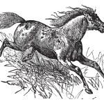 Постер, плакат: Mustang vintage engraving