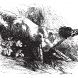 Постер, плакат: English Setter vintage engraving