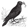 Jackdaw or Corvus monedula vintage engraving — Stock Vector