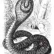 Indian Cobra or Spectacled Cobra or Naja naja vintage engraving - Stock Vector