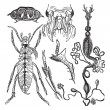 Постер, плакат: Coleopteres or French Language Scientific Journal of Entomology