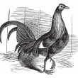 Gamecock of spel haan of spel cockerel of gallus gallus — Stockvector