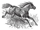Mustang vintage engraving — Stock Vector