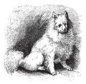 Husky vintage grabado — Vector de stock