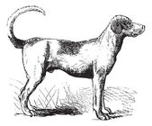 Foxhound vintage engraving — Stock Vector