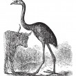 South Island Giant Moa or Dinornis giganteus, vintage engraving — Image vectorielle