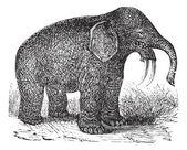 Dinotherium o azada tusker o dinotherium giganteum, ingr vintage — Vector de stock