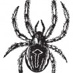 Common Orb-weaving Spider or Common Epeira or Araneus sp., vinta — Stock Vector #6745706