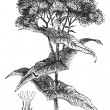 Joe-pye weed or Eutrochium sp., vintage engraving — 图库矢量图片