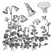 Linnaea borealis or Twinflower, vintage engraving — Stock Vector #6749885