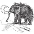 Woolly mammoth or Mammuthus primigenius vintage engraving - 图库矢量图片