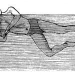 Sidestroke, vintage engraved illustration — Stock Vector #6754979