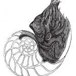 Chambered Nautilus or Nautilus pompilius, vintage engraved illus — Stock Vector #6754982