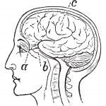Optic Nerve, vintage engraved illustration — Stock Vector #6755466