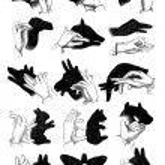 Shadows of the hand. - Reindeer, chamois, sheep, camel, pig, goo — Stock Vector