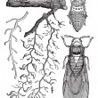 ストックベクタ: Various parts of insects, vintage engraving.