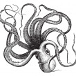Vetorial Stock : Common octopus (Octopus vulgaris), vintage engraving.