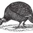 Common guinea fowl (Numida meleagris), vintage engraving. — Stockvectorbeeld