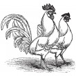 Male and female of White Leghorns (chicken) vintage engraving - Stok Vektör