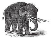American mastodon or Mammut americanum vintage engraving — Stock Vector