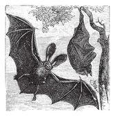 Brown long-eared bat or common long-eared bat, Plecotus auritus, — Stock Vector