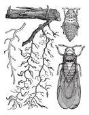 Varias partes de insectos, vintage grabado. — Vector de stock
