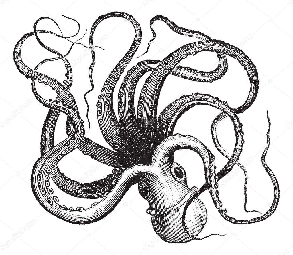 Octopus shower curtain ikea