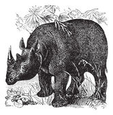Black Rhinoceros or Diceros bicornis vintage engraving — Stock Vector