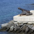 Artillery gun aiming at the sea — Stock Photo