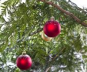 雪のクリスマス ツリー — ストック写真