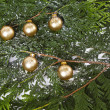 Golden Ornaments on snowy evergreen — Stock Photo