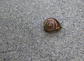 Snail on Stone Wall — Stock Photo
