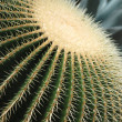 Cactus — Stock Photo #6142002